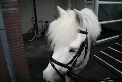 paardsint02