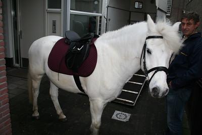 paardsint03