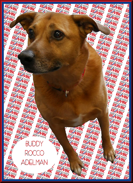 Buddy-Remax