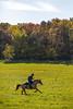 Donald Park Horse Trails