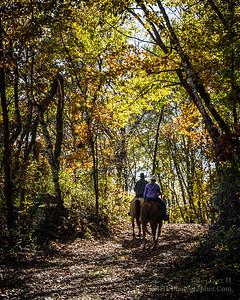 Horse Trails