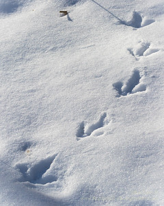 Snow Bottom State Natural Area - Turkey Tracks