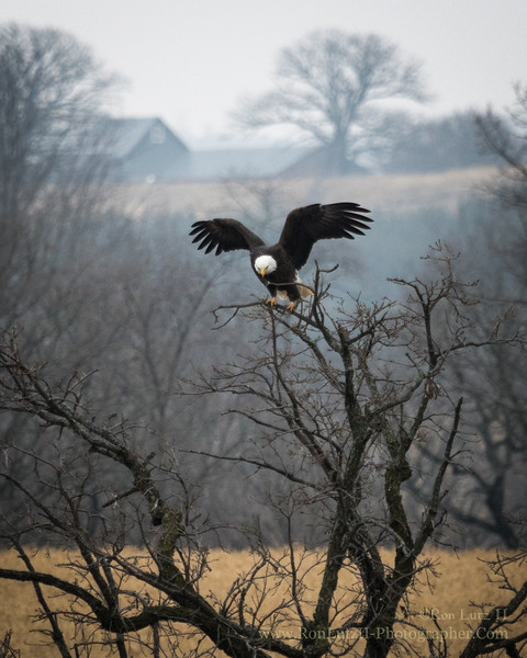 Yellowstone Wildlife Area
