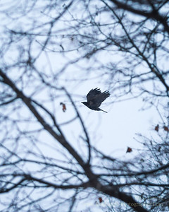 """""""Crow's Theology"""" - Ted Hughes"""
