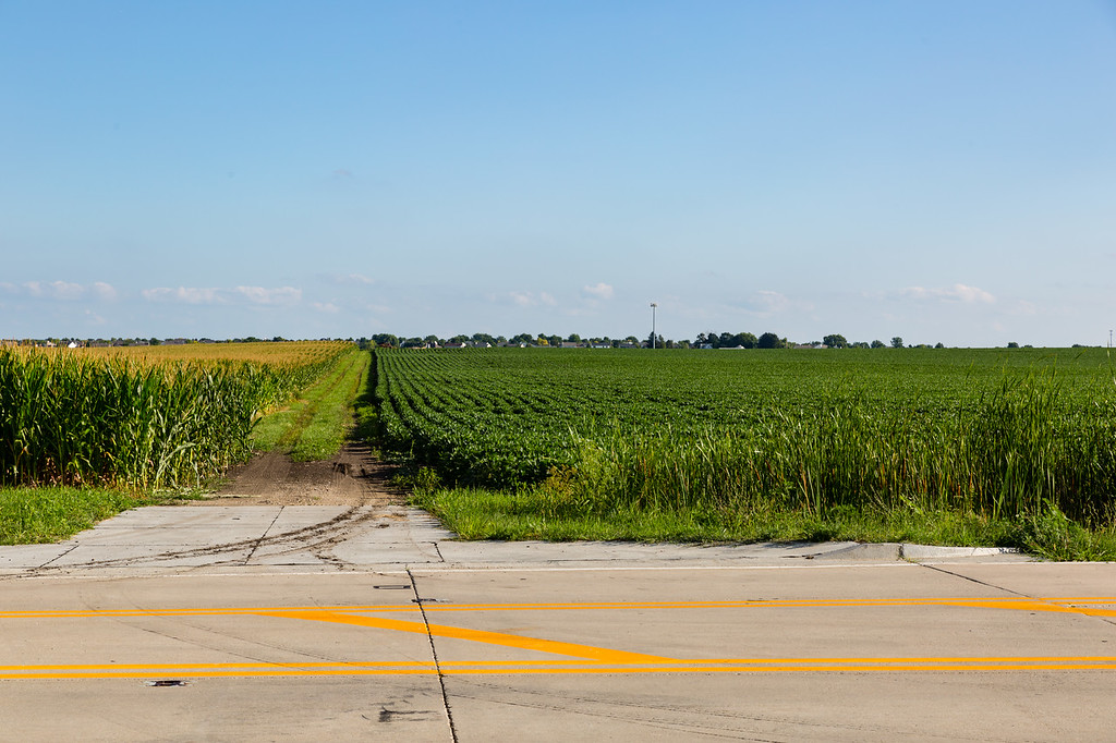 farm road separates the corn field from the soybean field