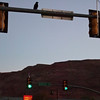 Moab, Utah and American Mountain Guides Association meetings October 30, 2009 to November 1, 2009 - Crow and Traffic Lights on Main Street at Dawn