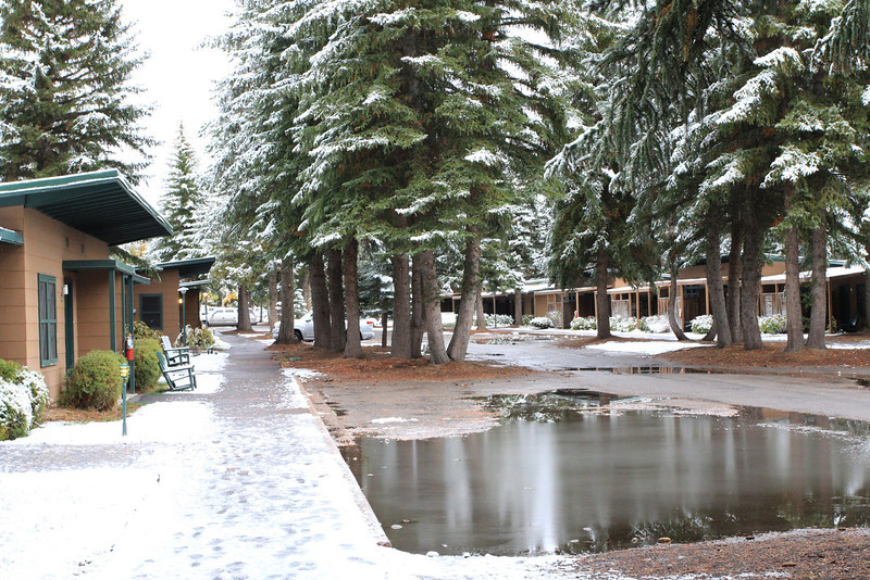 """Cabins at Jackson lake Lodge (my room to left of """"the pond"""")"""