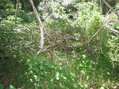 Overgrown absorption area.