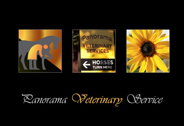 Equine division of Panorama vet.
