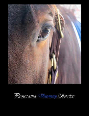 Horse division of Panorama vet