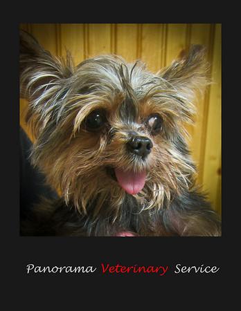 We love dogs at Panorama vet
