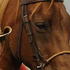 Jan Flanagan friends of Panorama vets
