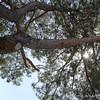 Parmeeta4web0312