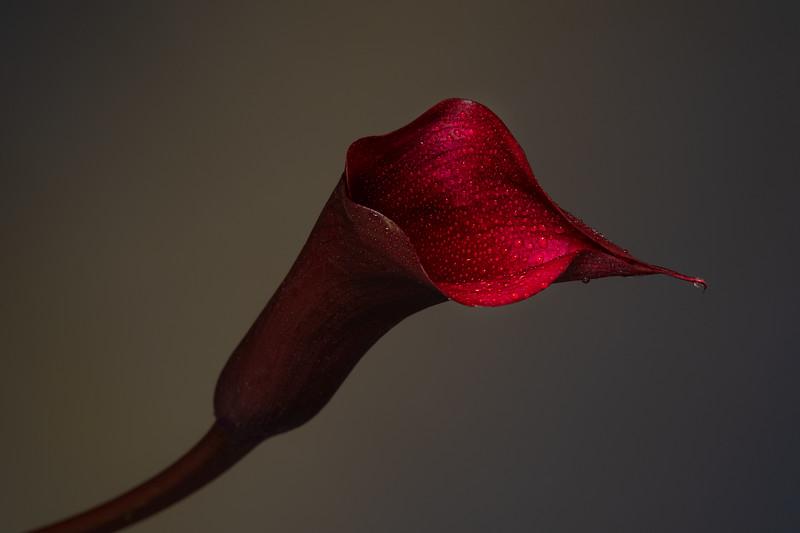 2014-06 Flowers 0435