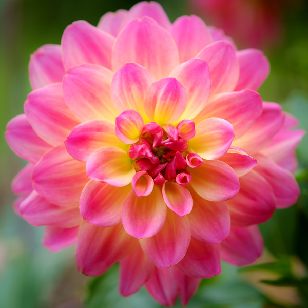 2014-06 Flowers 0202