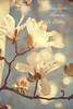 ADVERTISEMENT - Jasmine Tree