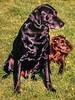 Smiths Dogs 23223375_1587832441240328_1635808280_o (2)