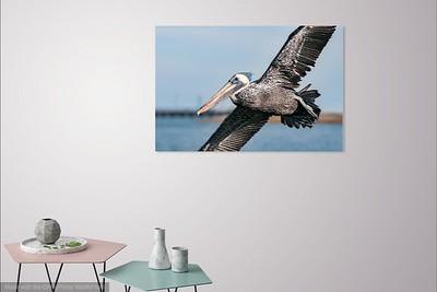 065 Pelican Coming in for Landing 2