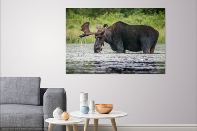 036 Moose 1 copy