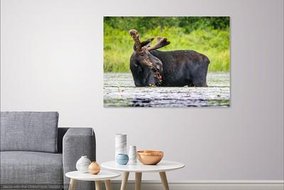 038 Moose 3 copy