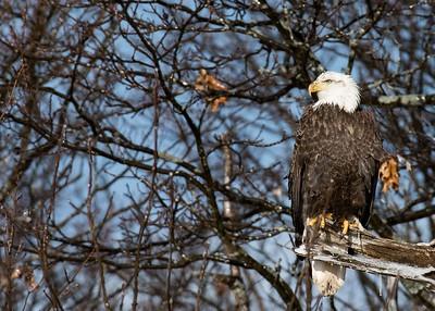 018 Eagle 1