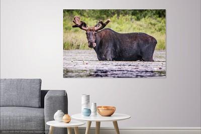037 Moose 2 copy