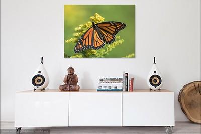 044 Monarchjpg