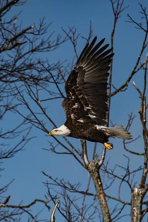 019 Eagle 2