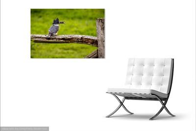 026 Kingfisher