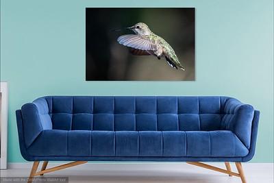 076 Hummingbird copy