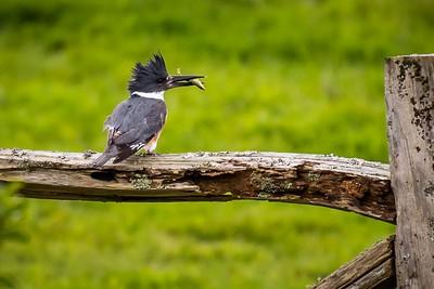026 Kingfisher 2