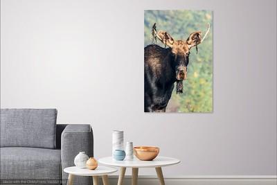 045 Moose 4 copy