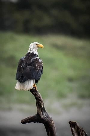 025 Eagle 3