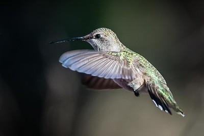 076 Hummingbird