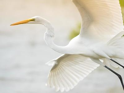 041 Egret