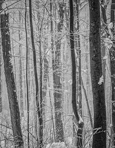 013 Winter Wonderland