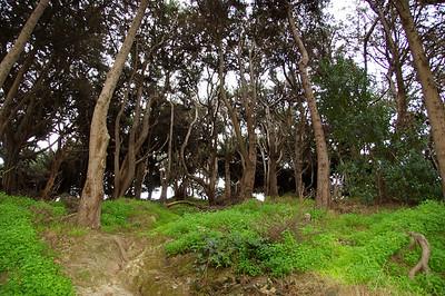 Pioneer Park Trees