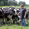 Dairy farmer Warren Shaw with some of his organic cows grazing, at Shaw Farm in Dracut. (SUN/Julia Malakie)