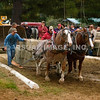 Pulling/Draft Horses - Stock