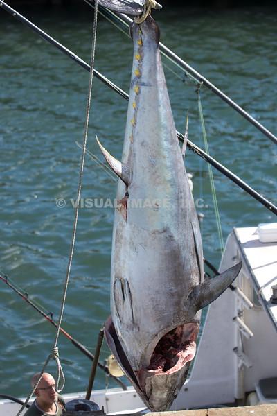 Tuna Fishing - Stock