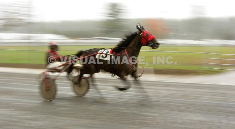 Harness Racing - Stock