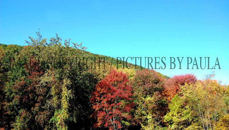 PHOTO 38 - 650