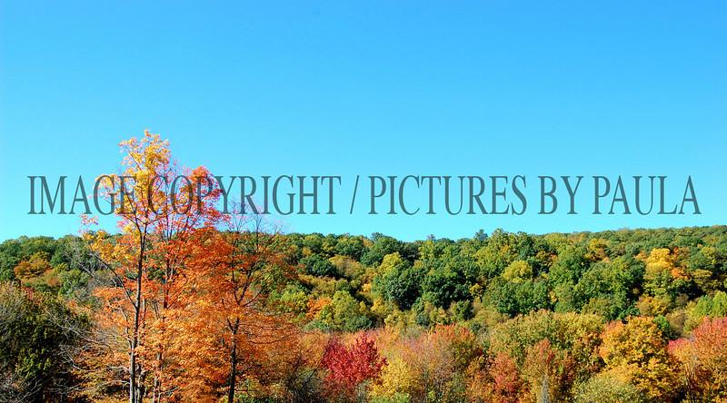 PHOTO 42 - 646