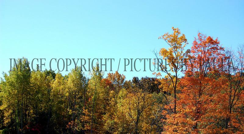 PHOTO 29 - 662