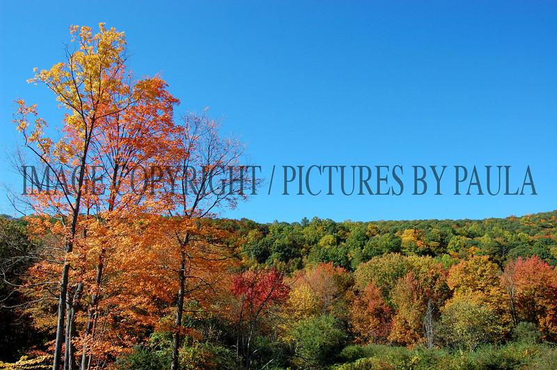 PHOTO 1 - 683