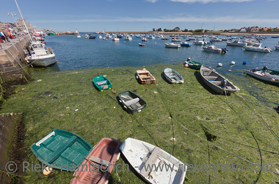 BARFLEUR, FRANCE - JULY 4: Fishing and recreational boats at low tide in the harbor of Barfleur, France on July 4, 2011. Barfleur is a picturesque fishing village in Basse Normandy.