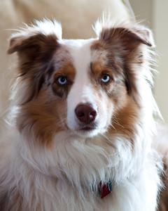 """Vince's Pup - """"Churro"""""""