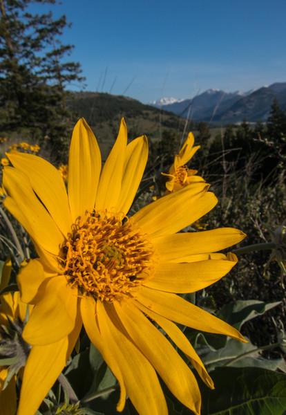Washington State May 2012-0513