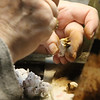 """Family-owned-company, Wee Forest Folk, makes miniatures in Carlisle. Glenda Greenaway of Pepperell airbrushes the """"fur"""" parts of mice. (SUN/Julia Malakie)"""