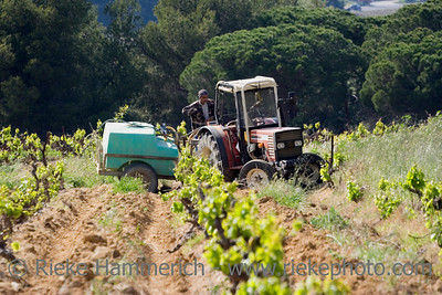 winegrower working in the vineyard - spring on the french riviera - adobe RGB